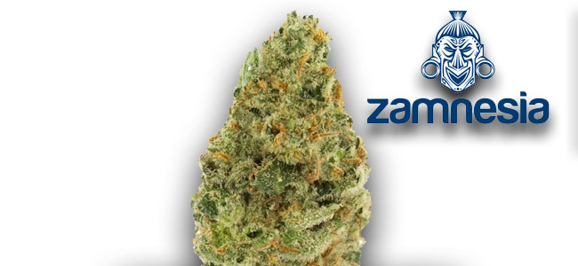 Super Silver Haze Zamnesia Seeds