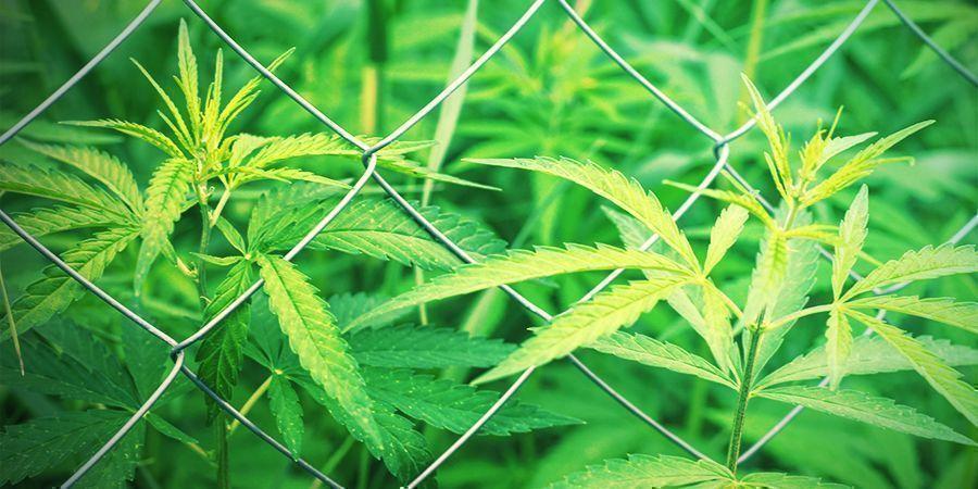 Kies je locatie om cannabis te kweken