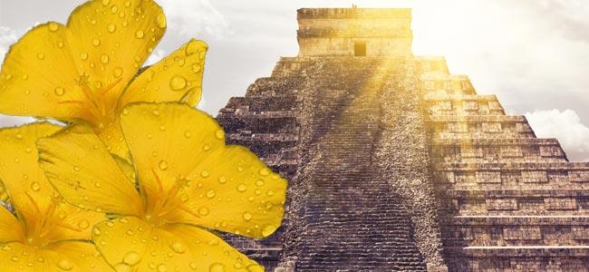 Damiana In De Mayacultuur