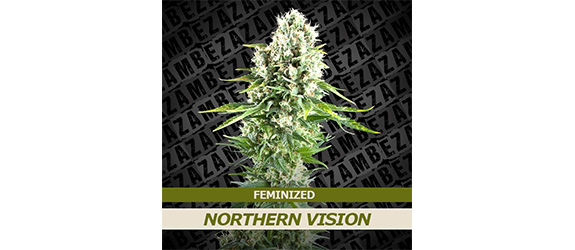 NORTHERN VISION – ZAMBEZA SEEDS