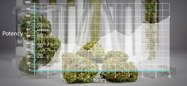 Huidige Marihuana Is Sterker Dan Vroeger