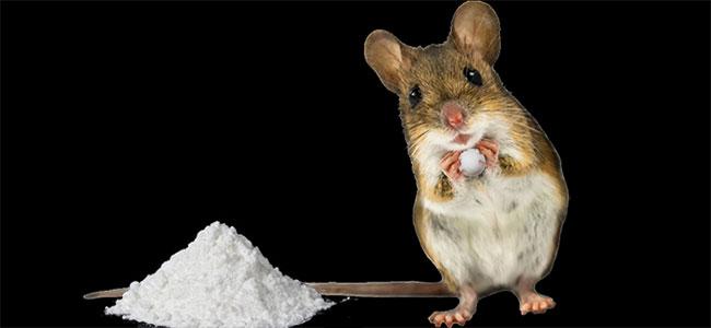 Speed verslaafde muis