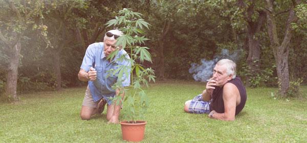 Omgeving cannabis
