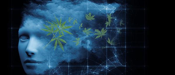 Cannabis dromen