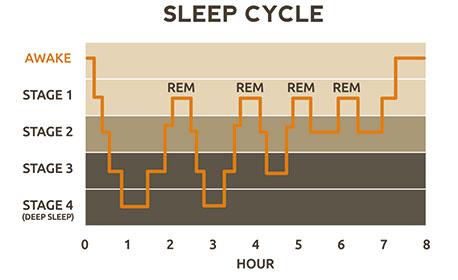 slaapcyclus