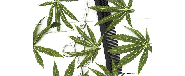 Cannabis training