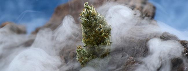 Heilige cannabis