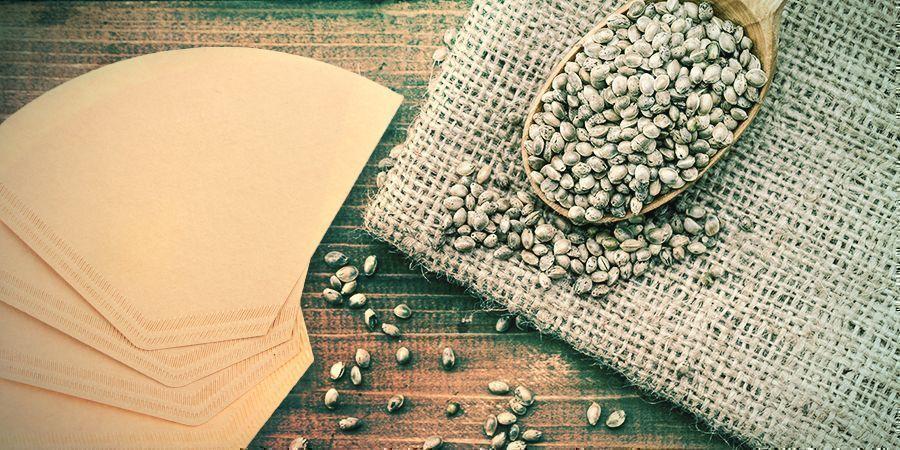 Cannabis Zaden Ontkiemen: Koffiefilter