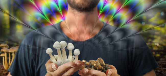HET VERSCHIL TUSSEN MAGIC MUSHROOMS EN MAGIC TRUFFELS