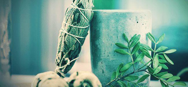 Hoe Gebruik Je Salvia Divinorum?