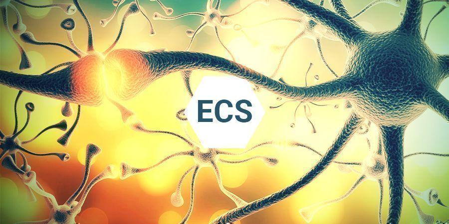 Wat Is Het Endocannabinoïdesysteem?