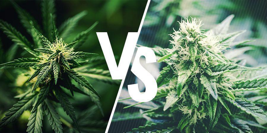Wat Is Het Verschil Tussen Hennep En Cannabis?