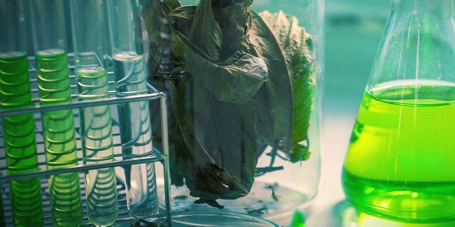 De Chemie Van Kratom