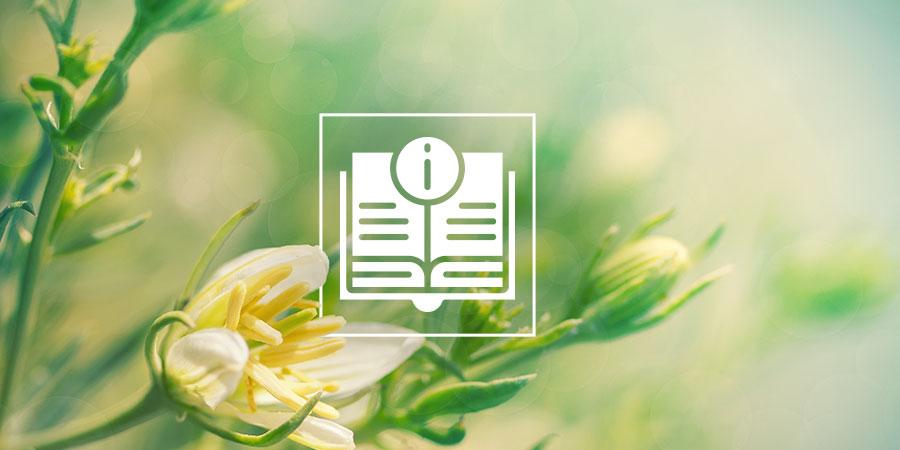 Peganum Harmala: Alles Wat Je Weten Moet