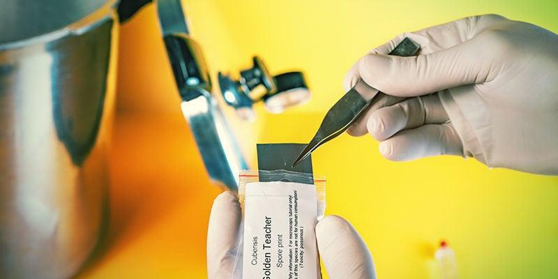 Paddo-Sporenspuit: Met je pincet haal je de sporenprint uit de verpakking. Houd het boven het borrelglas of schaaltje