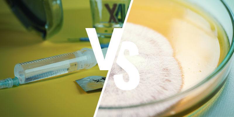 Paddo Sporenspuit versus sporenprints in agar