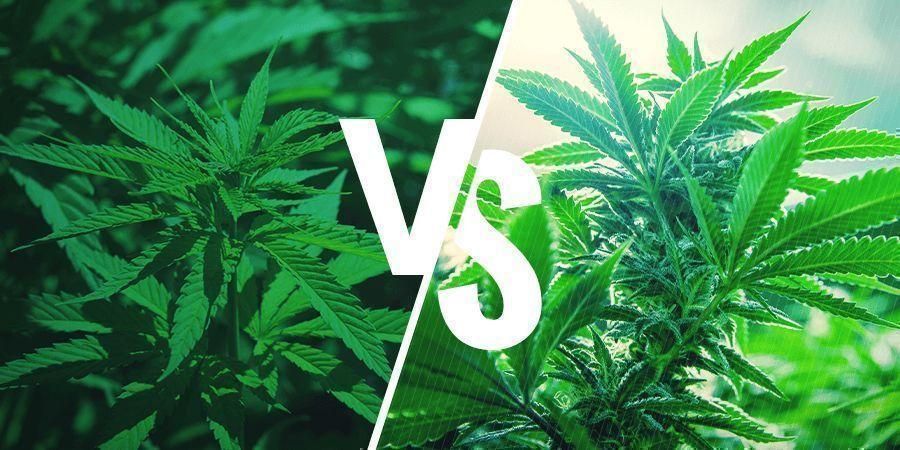 Sativa vs. Indica: Effecten