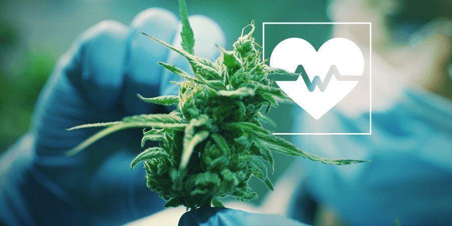 Cannabis Onderzoek: Een selectie van de meest belangrijke medische onderzoeken