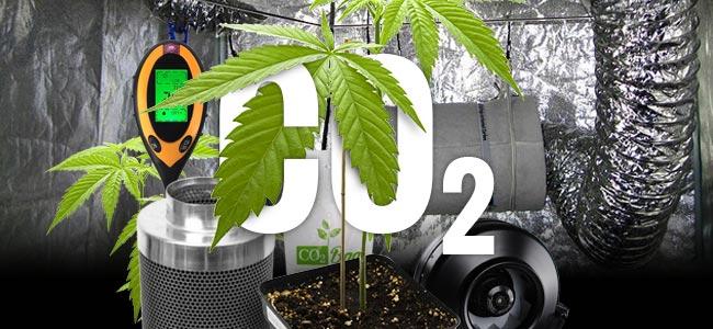 CO₂ En Cannabis