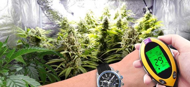 Positieve Effecten Van CO₂ Op Cannabisplanten