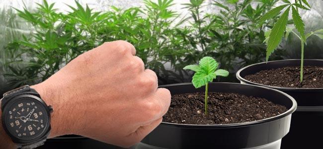 Wanneer Gebruik Je CO₂ Voor Cannabisplanten
