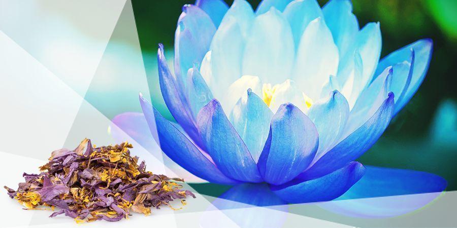 Blauwe Lotus - Vape Kruiden Goed Humeur
