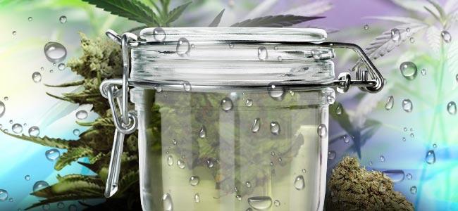 Water Curing Van Cannabis