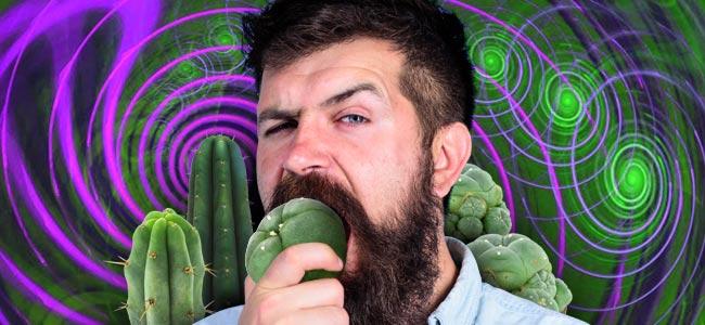 Het Correct Doseren Van Mescaline Cactussen