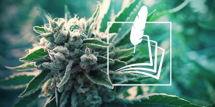 De Geschiedenis Van Cannabis