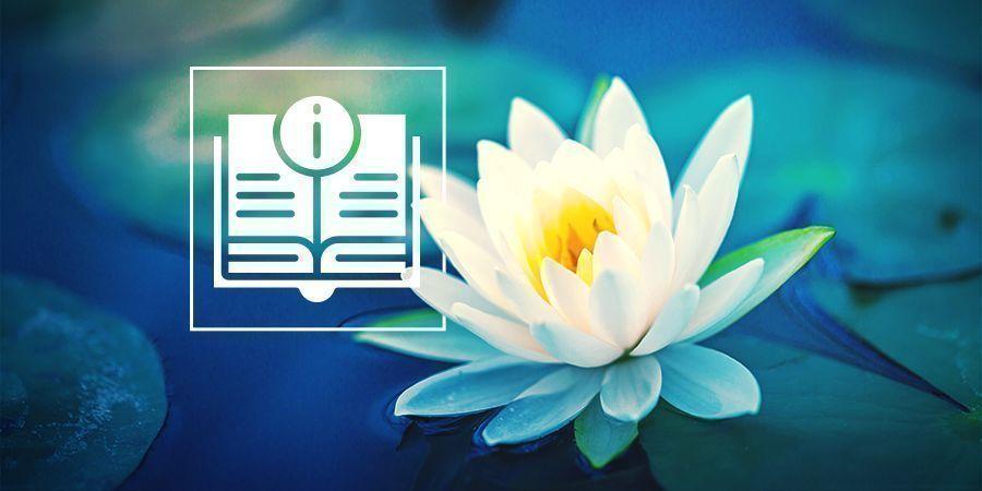 Alles Wat Er Te Weten Valt Over Witte Lotus