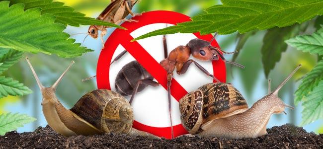 Vervelende Beestjes En Insecten
