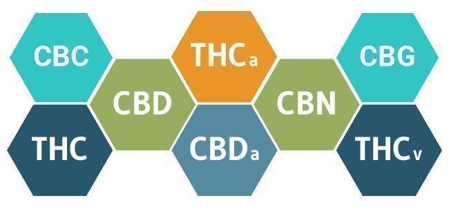 Full Spectrum CBD vs. CBD-Isolaat: Voordelen En Nadelen