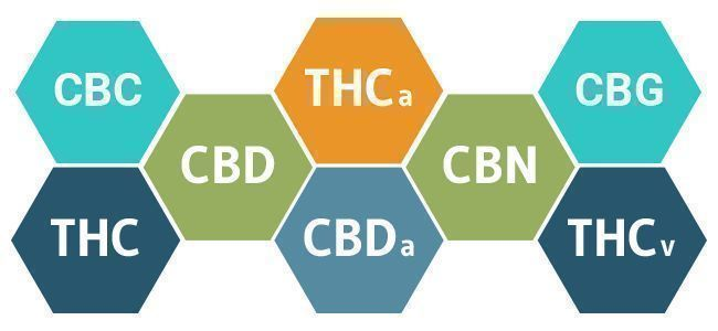 cannabinoïden cannabis