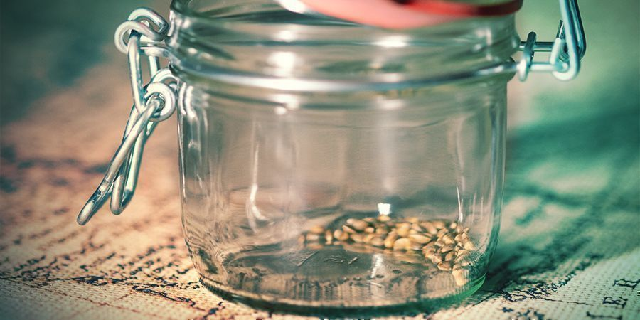 What Is The Best Way To Store Cannabis Seeds?