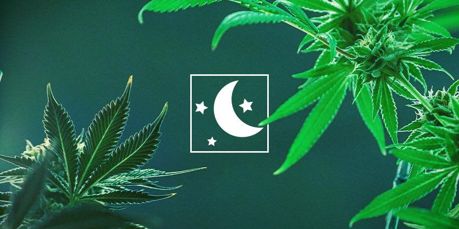 Kies De Cannabissoort Die Aan Jouw Behoeften Voldoet
