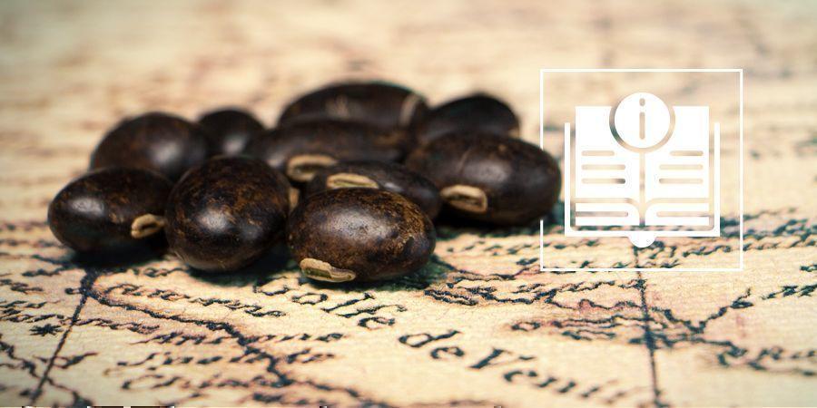 Fluweelbonen: Alles Wat Weten Moet