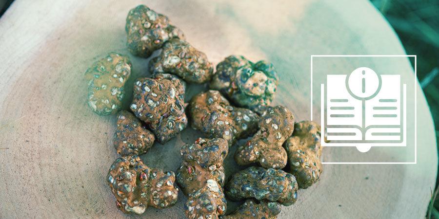 Alles Wat Je Moet Weten Over Truffels