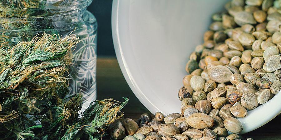 Zamnesia Gratis Cannabiszaden-Actie