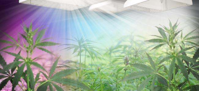 Het Lichtspectrum En Cannabis