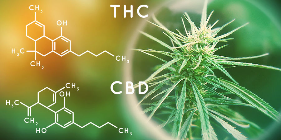 Cannabis Seedfinder: Hoeveelheid Cannabinoïden