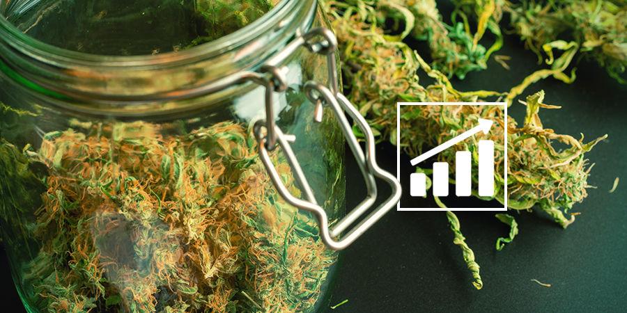 Cannabis Seedfinder: Een Kleine Opmerking Over Wiet Opbrengst