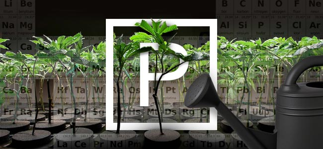 Fosfor En Wiet Kweken