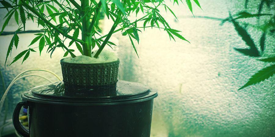 Wat is cannabis-hydrocultuur?
