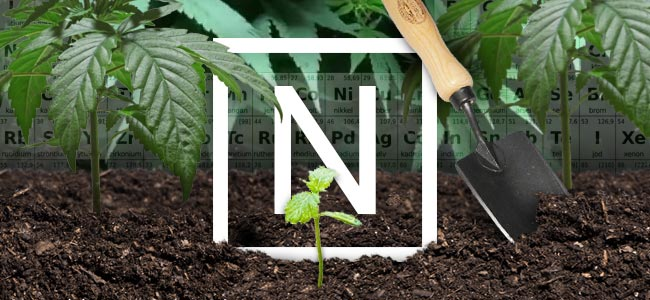 Stikstof En Cannabisplanten
