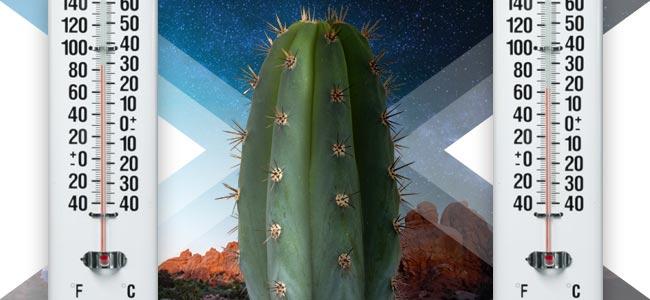 Beste Temperaturen Voor Cactussen