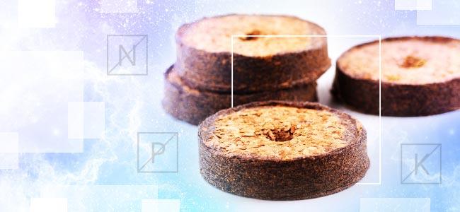 Kokos En Voedingsstoffen