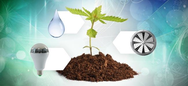 Het Kweken Van Cannabis In Aarde