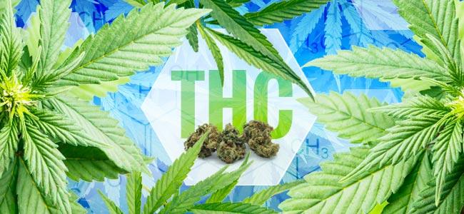 Wanneer Werd THC Ontdekt?
