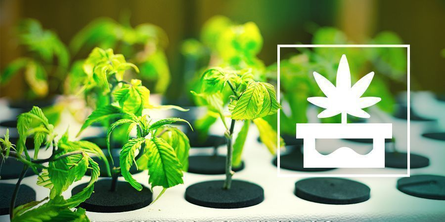 Het Kweken Van Cannabis Met Een Geavanceerde Hydrocultuur