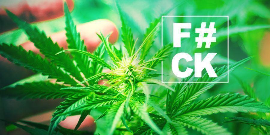 Cannabis Fimmen: Alles Wat Je Weten Moet